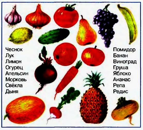 овощи фото и названия