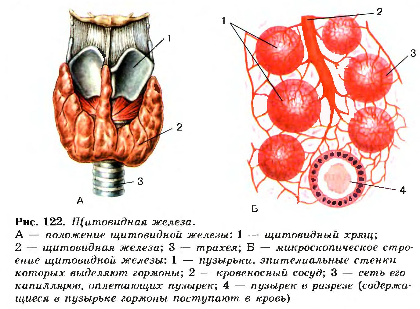 Заговор от вируса папилломы человека