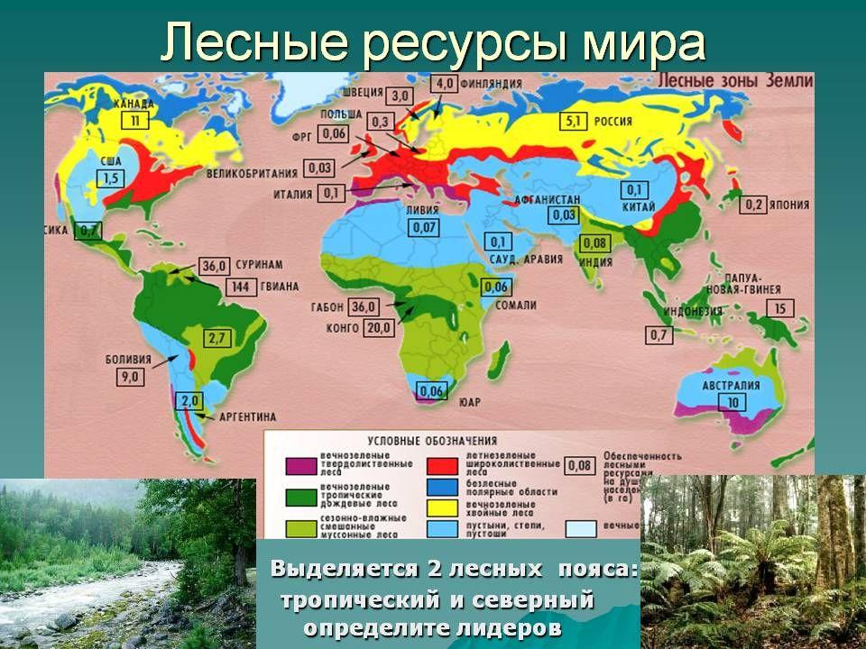 Реферат лесные ресурсы мира 7842