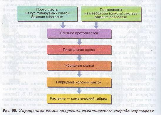 Реферат методы селекции растений 3249