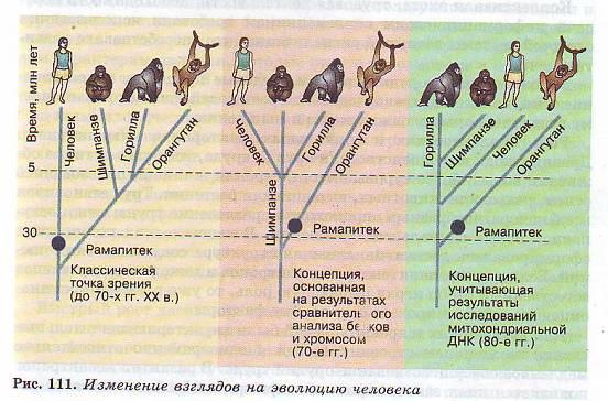 Реферат на тему движущие силы антропогенеза 7056