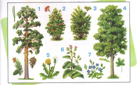 Реферат какие бывают растения 9317