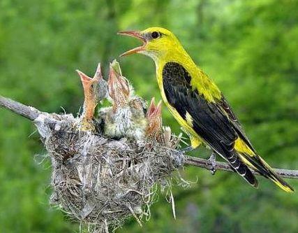 Доклад на тему птиц 9776