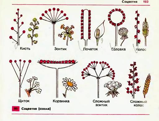 биология 6 класс размножение растений