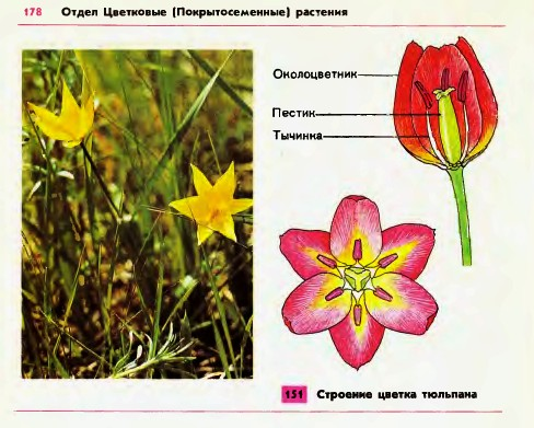 Реферат на тему лекарственные растения семейства лилейные 3235