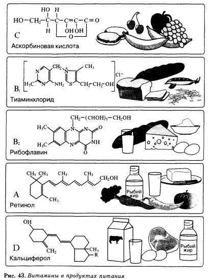 Витамины Химия класс Гипермаркет знаний Витамины