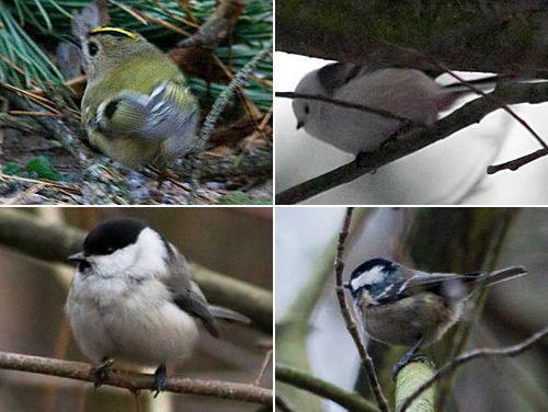 Реферат на тему Лесные птицы Гипермаркет знаний Птицы леса
