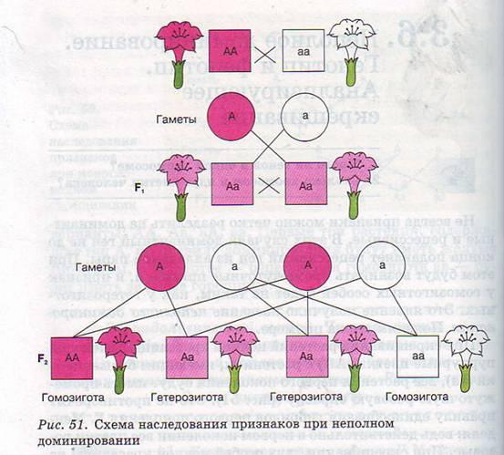 Составление Родословной По Генетике На Конкретном Примере