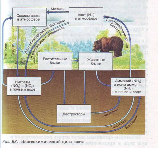 какие составляющие биосферы способствуют осуществлению биологтческого круговоратра веществ в природе