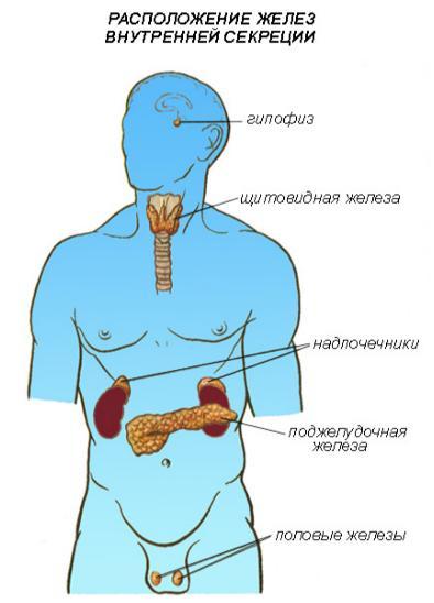 день Газовый схема расположения внутренних органов поджелудочная железа выявила, что поддельном