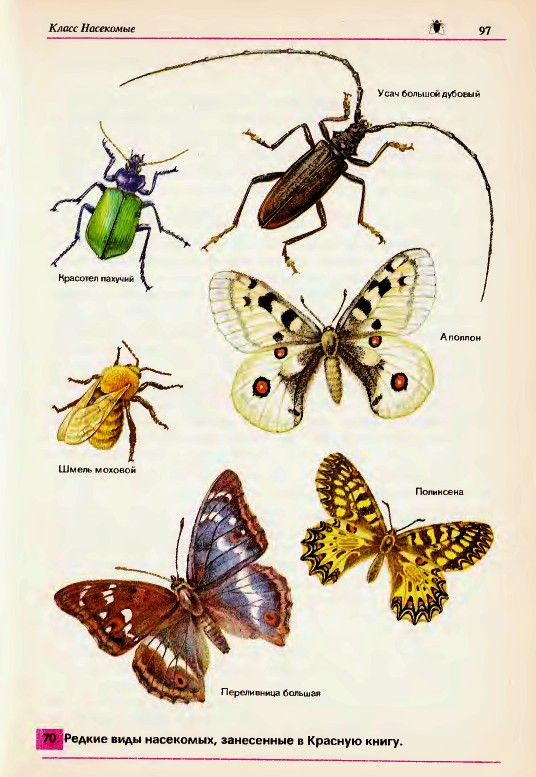 Многообразие насекомых их роль в природе и жизни человека  Насекомые