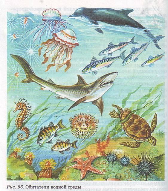 Обитатели водной среды реферат 4663