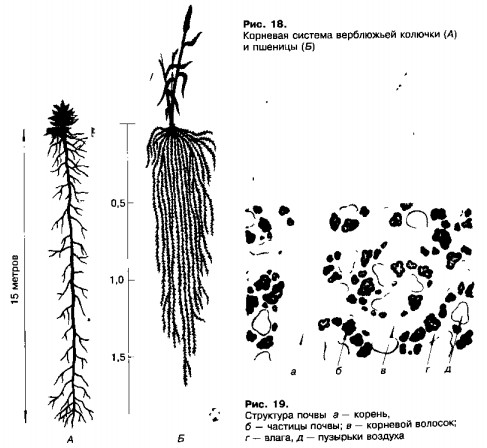 лечение паразитов травами рецепты
