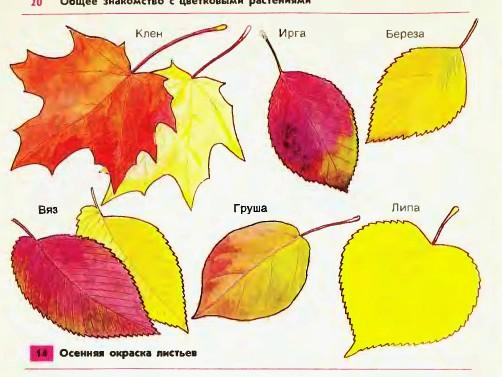 осенью 1 класс рисунок листья