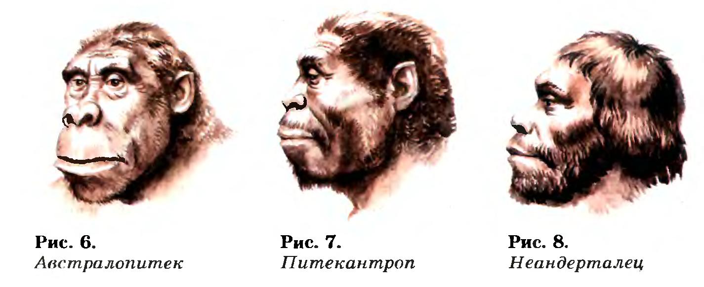 Реферат на тему историческое прошлое людей 1298