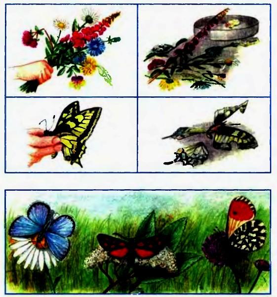 кто бабочек ловит