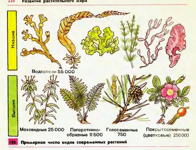 Многообразие растений доклад по биологии 3655
