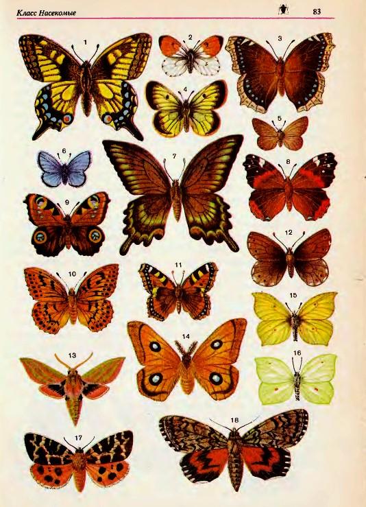 Превращаем ленты в порхающих бабочек