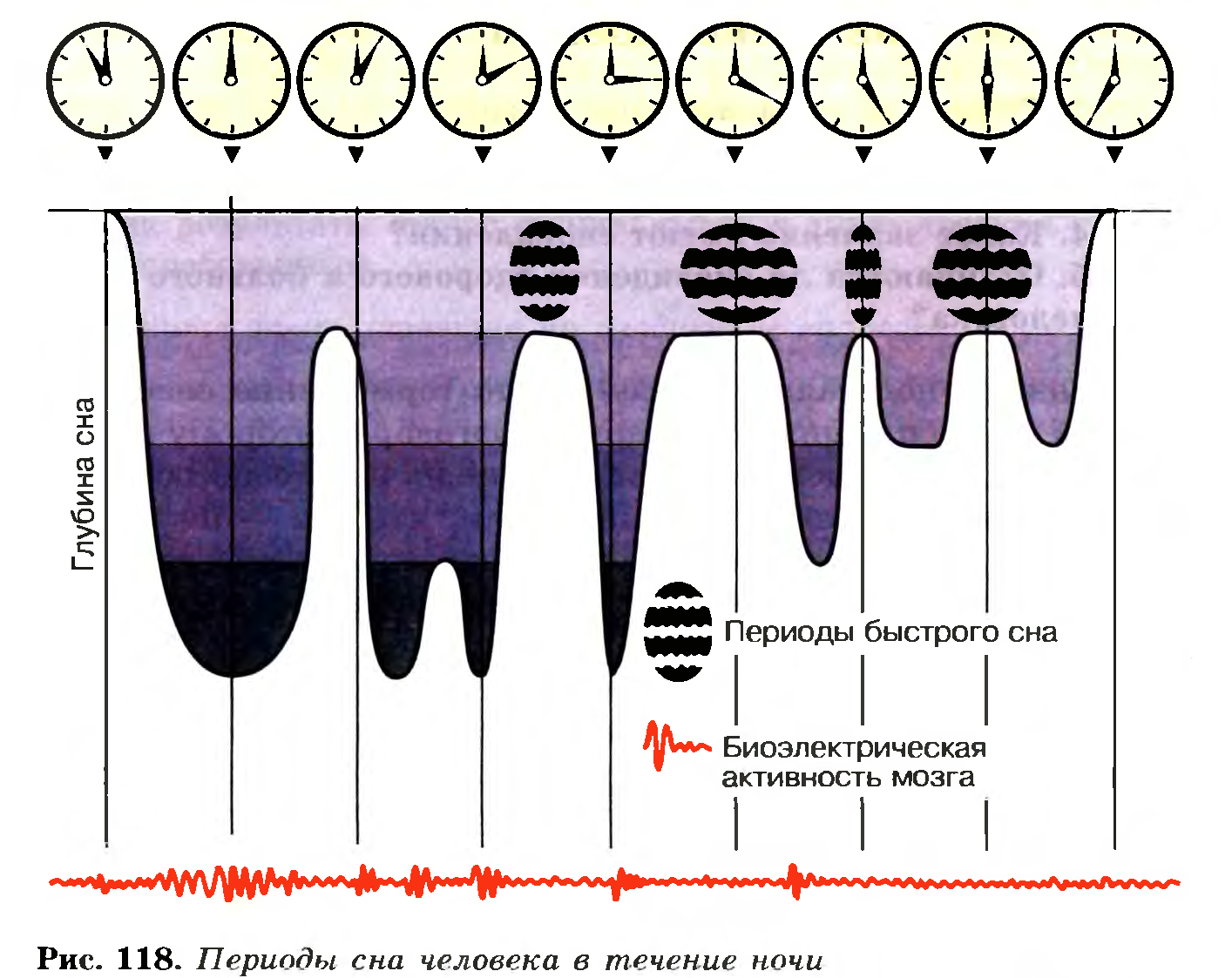 Что значить во сне биология