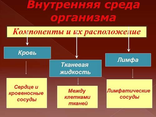 Кровь и остальные компоненты внутренней среды организма