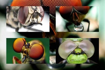 Очі комах.