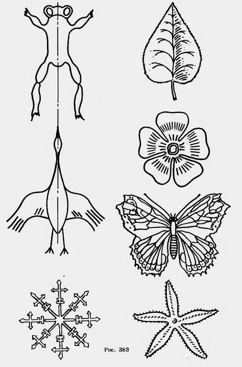 примеры симметрии в природе картинки для смотря фото