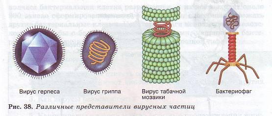 Вирус своими руками д