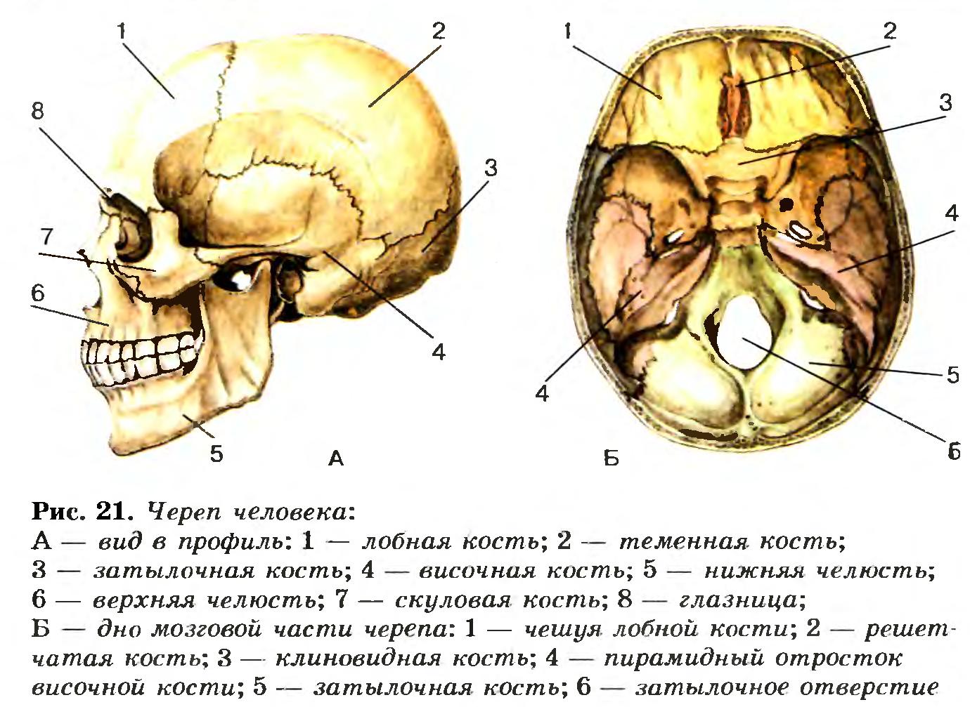 шлем в виде черепа