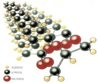 Структура молекули ліпідів (кисень, вуглець, водень)
