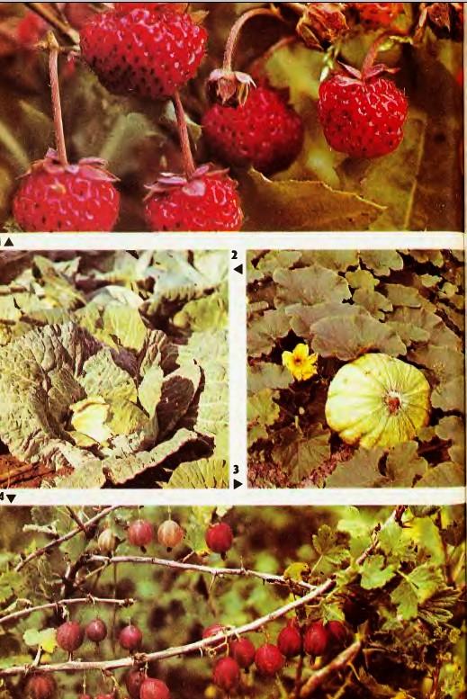 Происхождение культурных растений Гипермаркет знаний Сельскохозяйственные растения
