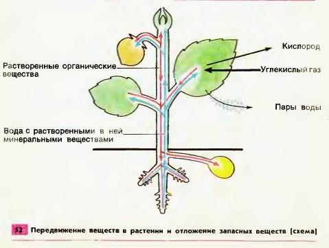 ремонт презентация передвижение веществ в растении 6 класс биология посвящены