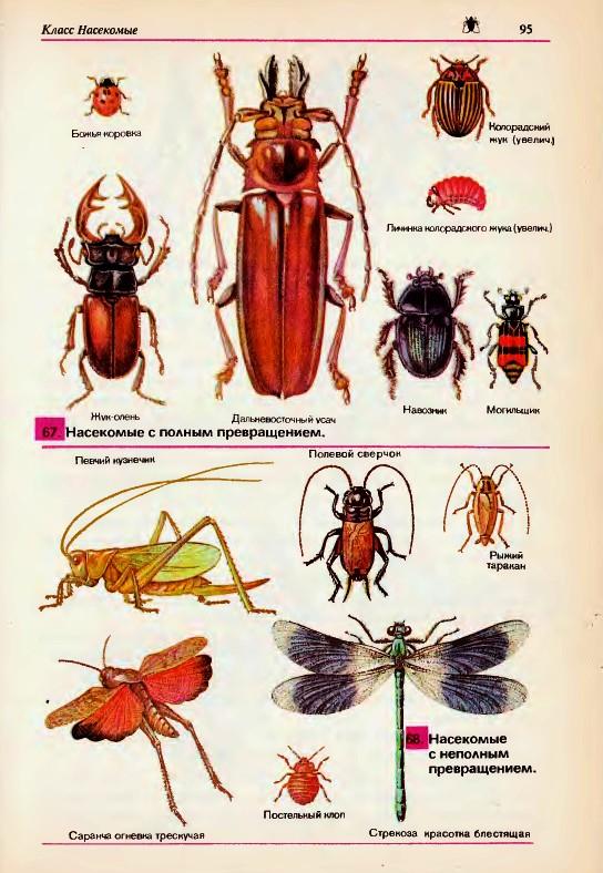 Почему насекомые очень интересны как объекты изучения