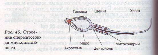 foto-erotika-zhenshina-v-trusikah-szadi